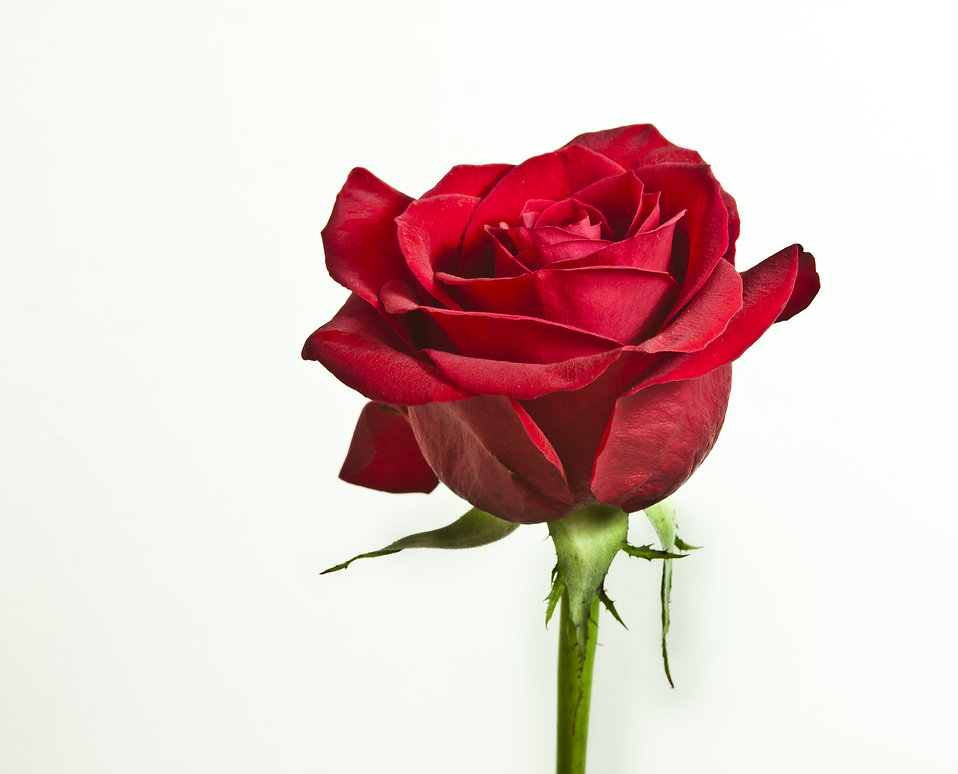 essay on the name of the rose The name of the rose is filled with latin phrases, literary allusions, medieval history and theology, and deconstructionist and semiotic theory it has enjoyed wide acclaim despite its complexity .
