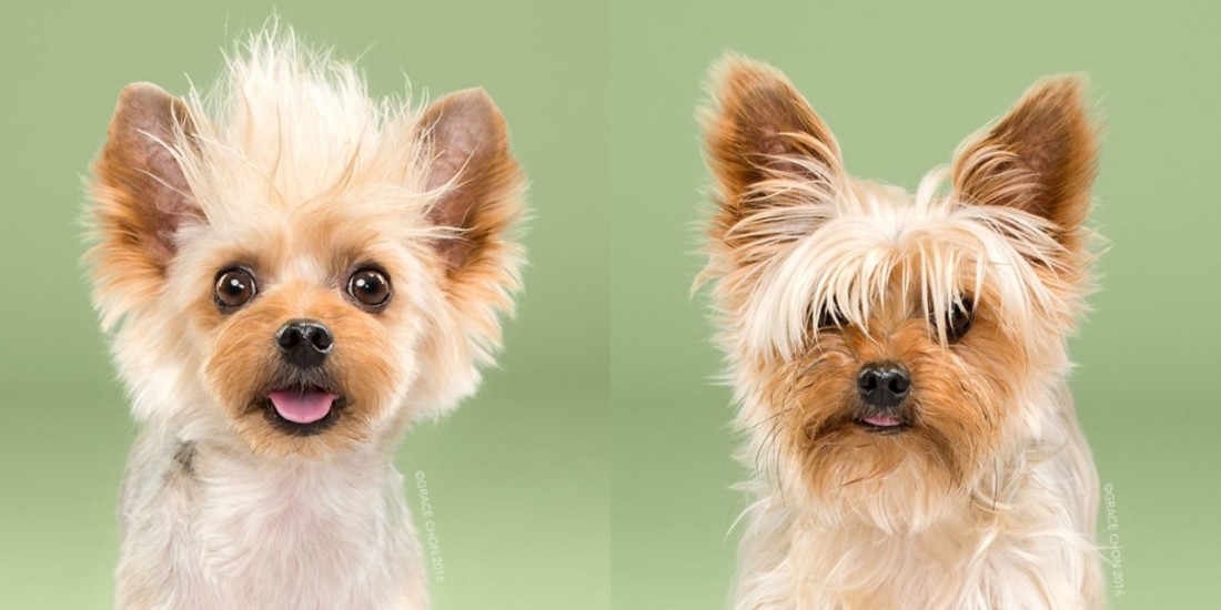 teddy-before-and-after-meeting-a-stylist
