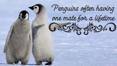 Photo of Penguins Teaches Us A lot About Love. Here are 13 Lessons that we can learn from them