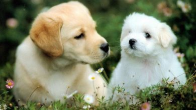 Photo of 15 Most affectionate dog breeds
