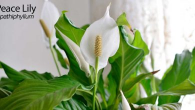 Photo of 10 Plants for Removing Indoor Toxins