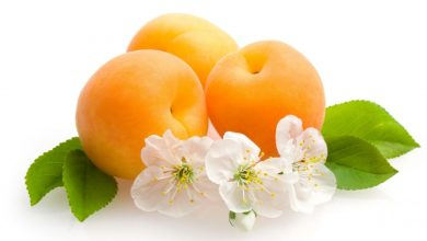Photo of Apricot – Dream interpretation