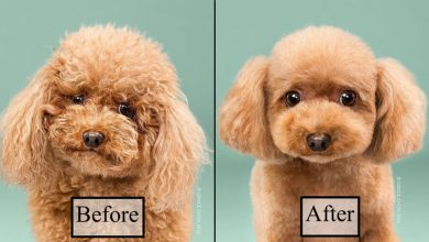 Photo of Look how much these dogs change after grooming!