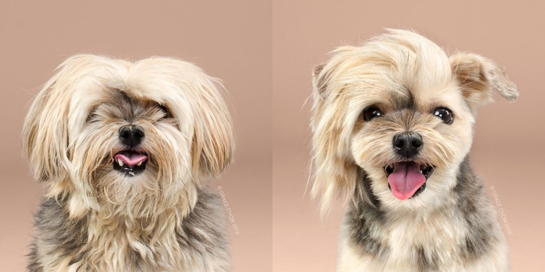 rocco-before-and-after-meeting-a-stylist