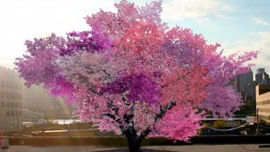 Photo of This Is One Of The Most Beautiful Trees In The World. But Can You Guess What Grows From It?